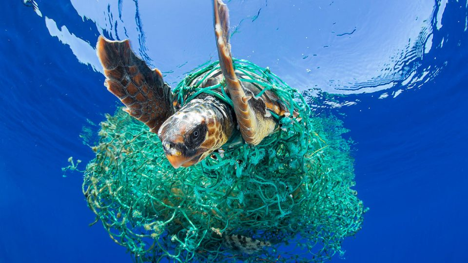#01 - A sea turtle entangled in a ghost net